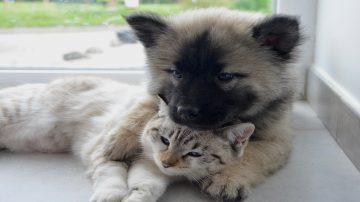 dog-cat-2904616